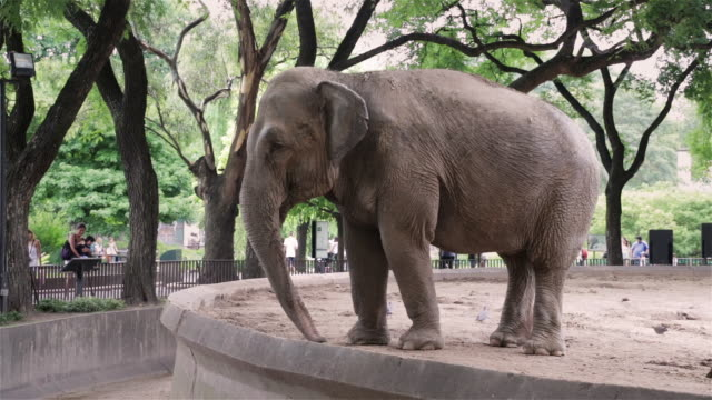 ms an elephant in buenos aires zoo / buenos aires, argentina - zoo stock videos & royalty-free footage