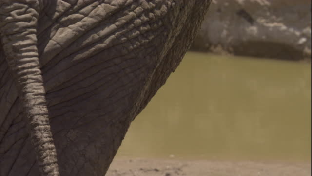 An elephant mud bathes, Skeleton Coast, Namibia. Available in HD.