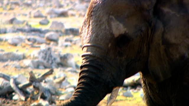 An elephant standing/ Etosha National Park/ Namibia