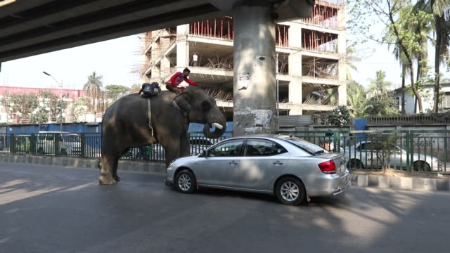 an elephant tries to collect money from cars hampering traffic movement on the busy city streets in dhaka estimates say there are about 200 wild... - 捕らえられた動物点の映像素材/bロール