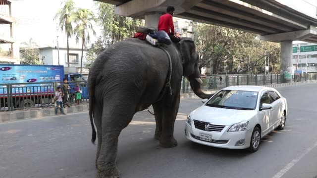 stockvideo's en b-roll-footage met an elephant tries to collect money from cars hampering traffic movement on the busy city streets in dhaka estimates say there are about 200 wild... - dier in gevangenschap