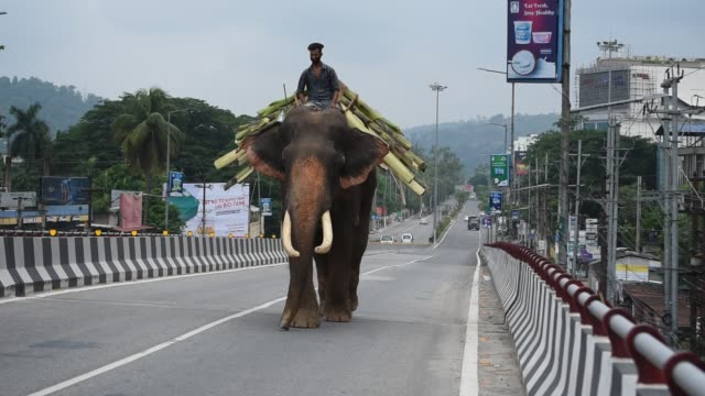 vídeos de stock, filmes e b-roll de july 3: an elephant with mahout is seen on an empty road, during the total lockdown imposed by the assam government to curb the spread of the novel... - câmara parada