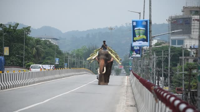 vidéos et rushes de an elephant with mahout is seen on an empty road during the total lockdown imposed by the assam government to curb the spread of the novel... - bananier