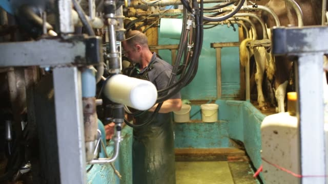 An employee checks pipework at the milking parlor of the Our Cow Molly Farm and Dairy near Sheffield UK on Friday Aug 2015 Shots pan right over many...