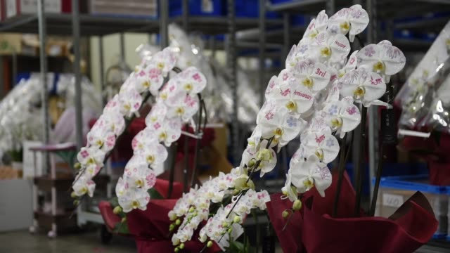 An employee paints designs on orchid petals at a warehouse used by ArtGreen Co in Tokyo Japan on Friday Jan 6 Orchid arrangements with designs...