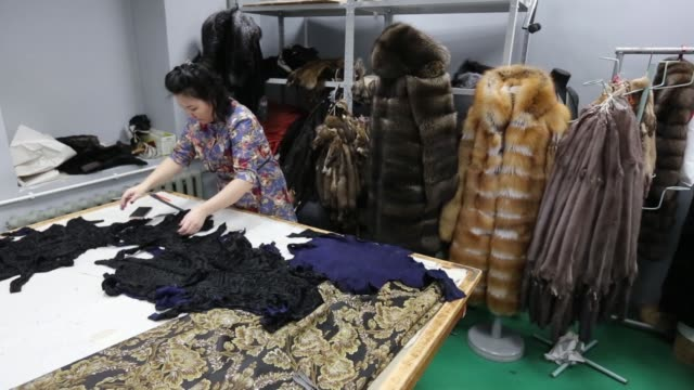 An employee pins the structural trim of a luxury mink fur coat on a cutting table during the early stages of manufacture at the Sardaana fur factory...