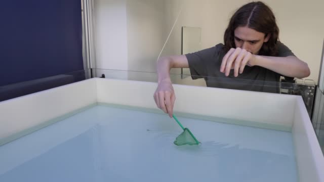 An employee places live guppies in a tank with a robot fish at the Dahlem Center for Machine Learning and Robotics at the Freie Universität on June...