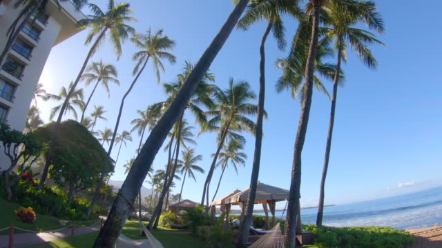 vidéos et rushes de an empty hammock at beach in kaanapali, maui, hawaii. - arbre tropical