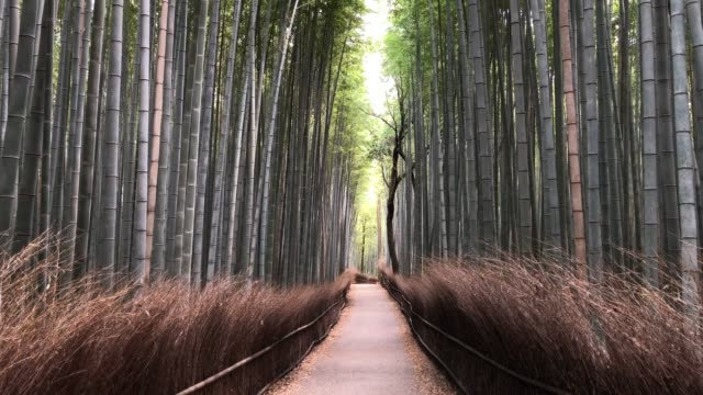 an empty pathway leads through arashiyama bamboo forest, one of kyotos most popular tourist sites but which is now almost devoid of visitors, on... - kyoto prefecture stock videos & royalty-free footage
