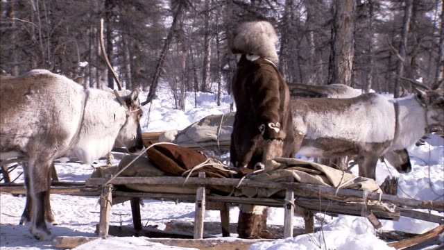 an evenki woman stands beside a sledge. available in hd - animal hair stock-videos und b-roll-filmmaterial