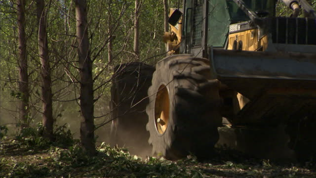 vidéos et rushes de an excavator pulls a bundle of trees out of a nursery and into a clearing. - pelleteuse