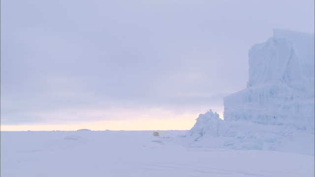 an iceberg and a polar bear on the snow-covered ground in the north pole - wide stock videos & royalty-free footage