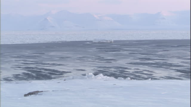 an iceberg drifts slowly along the coast of svalbard, norway. - bbc stock videos & royalty-free footage