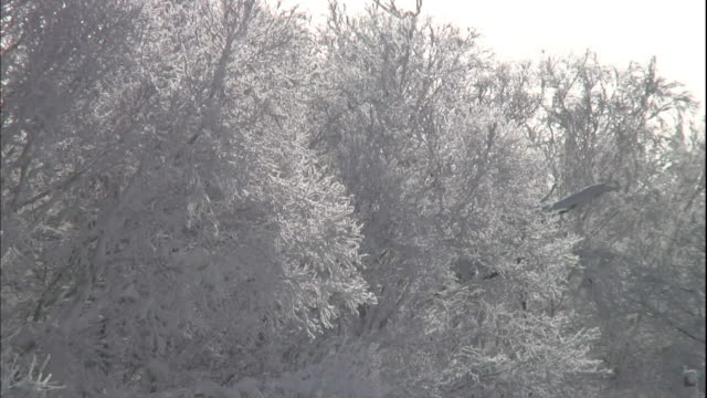 an ice-crystal cloud called diamond dust swirls around rime-covered trees. - ice crystal stock videos and b-roll footage