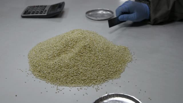 an independent quality control team analyzes royal quinoa finished product samples checking for any impurity that may have escaped detection at a... - qualitätsprüfer stock-videos und b-roll-filmmaterial