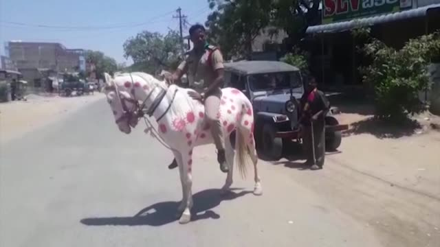 an indian policeman has come up with a novel way of spreading awareness of the coronavirus: a horse covered with diagrams of covid-19 - offbeat stock videos & royalty-free footage