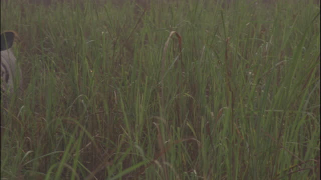 an indian rhinoceros stands in tall grass. - rhinoceros stock videos & royalty-free footage