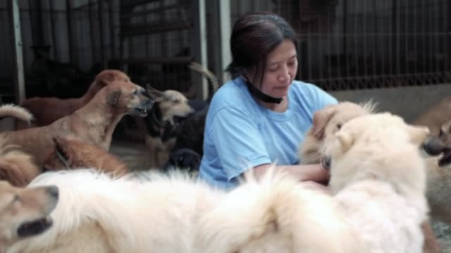 an indonesian doctor runs a facility that shelters more than a thousand dogs many which were rescued from slaughterhouses with their mouth and legs... - indonesia stock videos & royalty-free footage