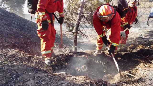 an inmate firefighter crew from prado conservation camp puts out a hot spot from the saddleridge fire on october 12, 2019 in porter ranch, california. - 囚人点の映像素材/bロール