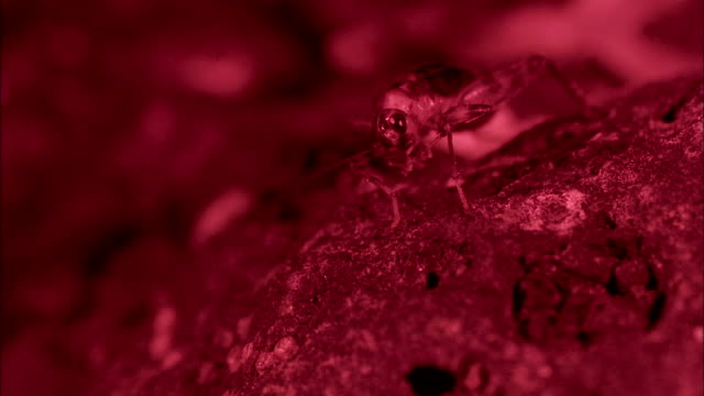 an insect arches as it perches on a porous rock. - porous stock videos & royalty-free footage