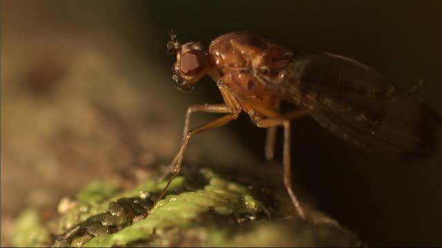 an insect flutters its wings. - gliedmaßen körperteile stock-videos und b-roll-filmmaterial