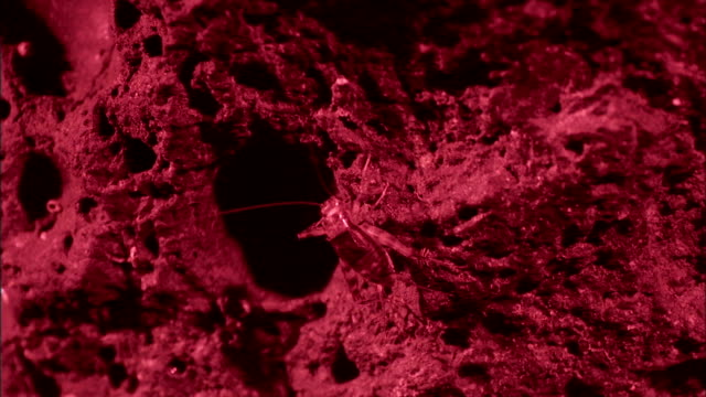 an insect perches near a crevice in a porous rock. - porous stock videos & royalty-free footage