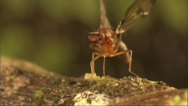 an insect rubs its feet together and flutters its wings. - gliedmaßen körperteile stock-videos und b-roll-filmmaterial