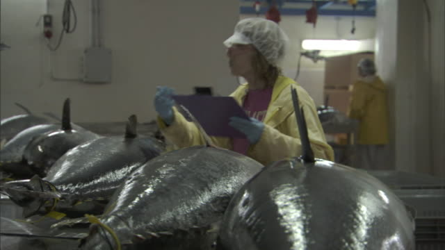 an inspector with a clipboard inspects large fish at a food-processing plant. - apron stock videos & royalty-free footage