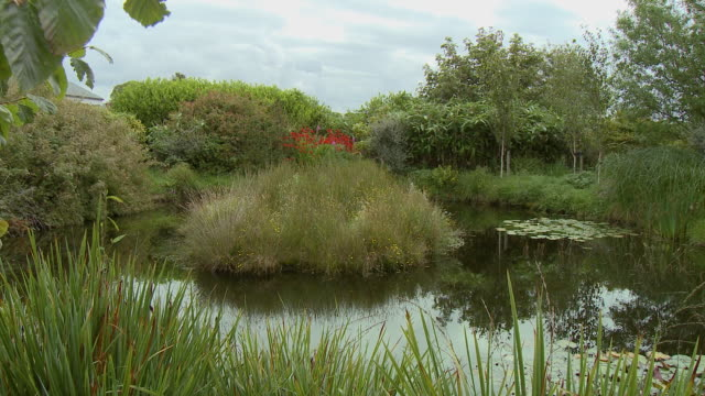 an island of grass in a small pond - wide stock videos & royalty-free footage