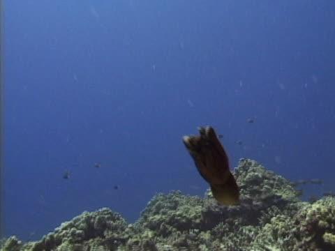 vídeos y material grabado en eventos de stock de an octopus - océano pacífico sur