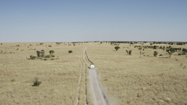 an off-road vehicle drives through grasslands in botswana - bronek kaminski stock videos & royalty-free footage