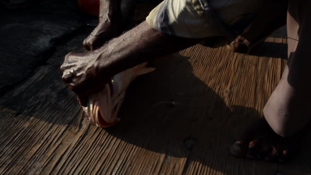 an old man's hands retrieving a hook from a fish on a boat in india - dead stock videos & royalty-free footage