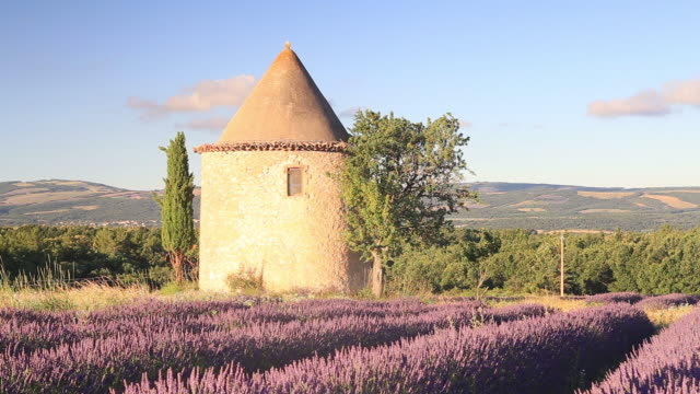 an old windmill amongst lavender fields in provence. - provence alpes cote d'azur stock videos & royalty-free footage