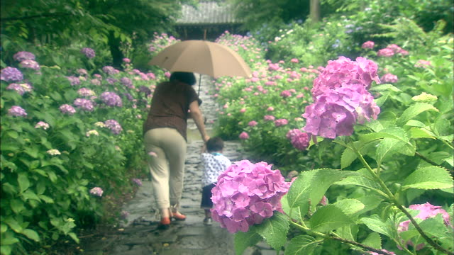 An old woman and her grandchild walk along a path lined with hydrangeas.