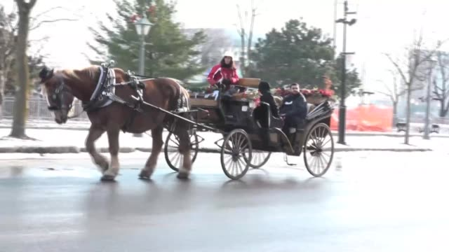 an oldfashioned way to get around to see sights or cruel to animals montreal's horse drawn carriages will be taken off the roads on december 31... - animal drawn stock videos & royalty-free footage