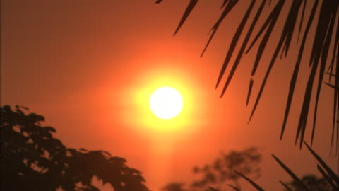 an orange sun glows above palm trees in the amazon rain forest. - twilight stock videos & royalty-free footage