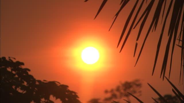 an orange sun glows above palm trees in the amazon rain forest. - amazon region stock videos & royalty-free footage