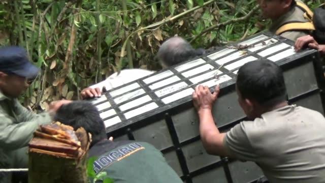 vídeos y material grabado en eventos de stock de an orangutan is seen after he was released into the forest in north sumatra indonesia on february 27 2017 - isla de sumatra