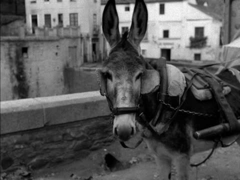 an organ grinder uses a cart and a donkey to travel around - the spanish donkey stock videos & royalty-free footage