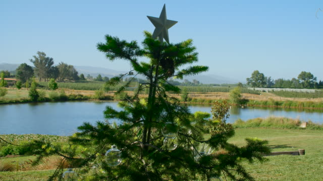 an outdoor summer christmas tree in new zealand on a sunny day - new zealand culture stock videos and b-roll footage
