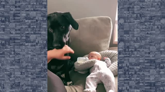 an overprotective puppy refused to let his owner touch her newborn baby, as captured in a viral... - baby girls stock videos & royalty-free footage