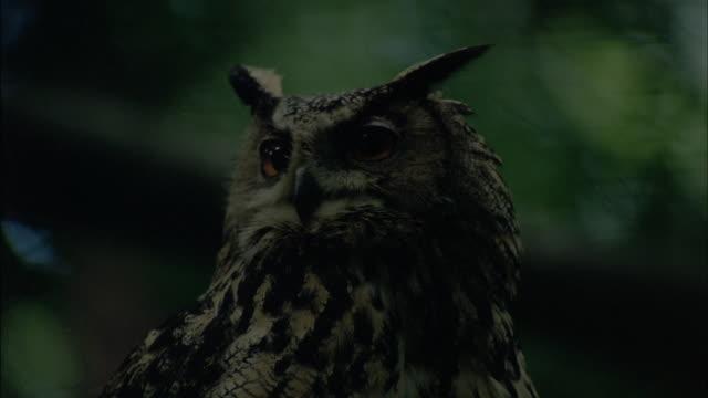 an owl perches on a branch. - 鳥の鉤爪点の映像素材/bロール
