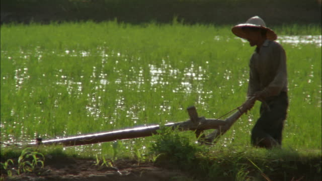 an ox pulls a plow driven by a farmer in straw hat. - rice paddy stock-videos und b-roll-filmmaterial