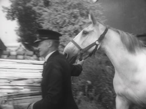 an rspca officer leads a horse into a horse box - rspca stock-videos und b-roll-filmmaterial