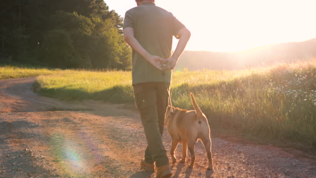 an senior man with his dog walks in nature during sunset. he explores with his dog - dog walking stock videos & royalty-free footage