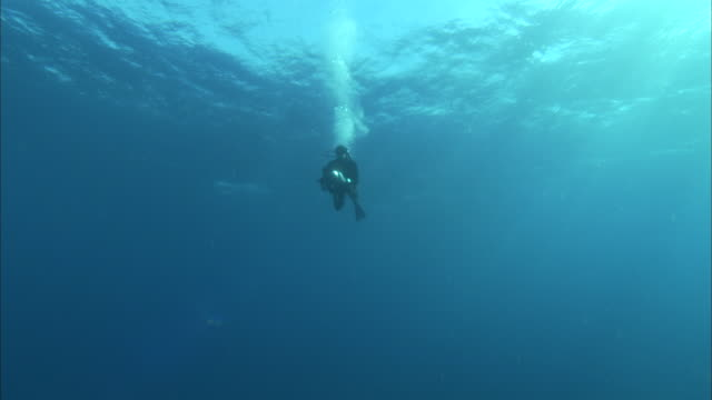 an underwater photographer swims through sun-dappled water. - diving flipper stock videos & royalty-free footage