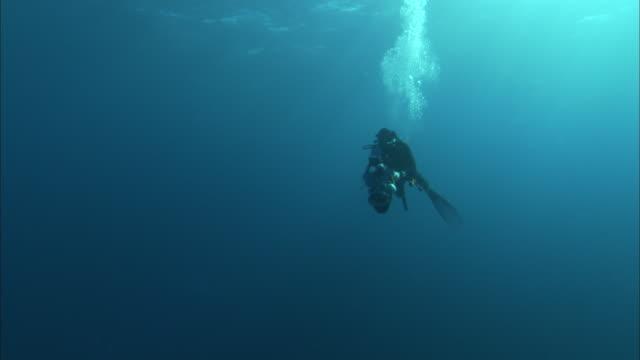 stockvideo's en b-roll-footage met an underwater photographer swims with a camera. - zwemvlies