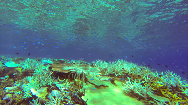 An underwater view of a coral reef of a tropical island.