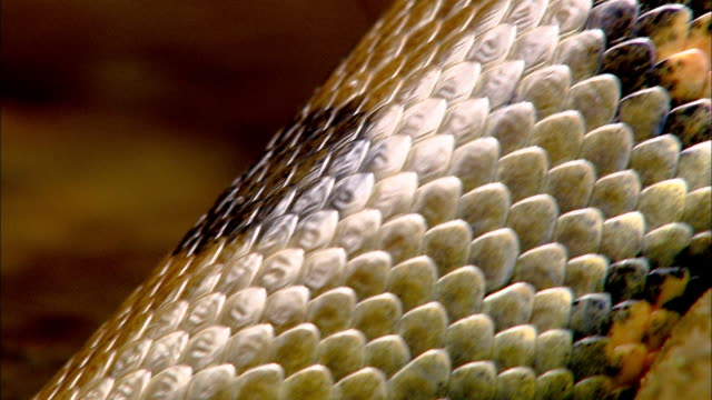 a anaconda snake's scales undulate as it slides in water. - scales stock videos & royalty-free footage