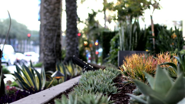 anaheim gardens and plants - anaheim california stock videos & royalty-free footage